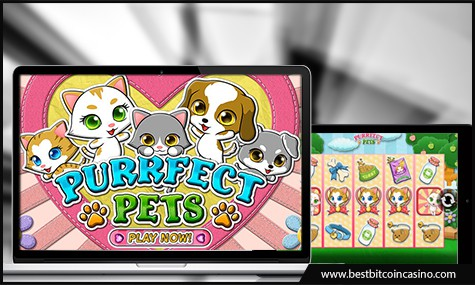Celebrate the release of Purrfect Pets slot on desktop and mobile